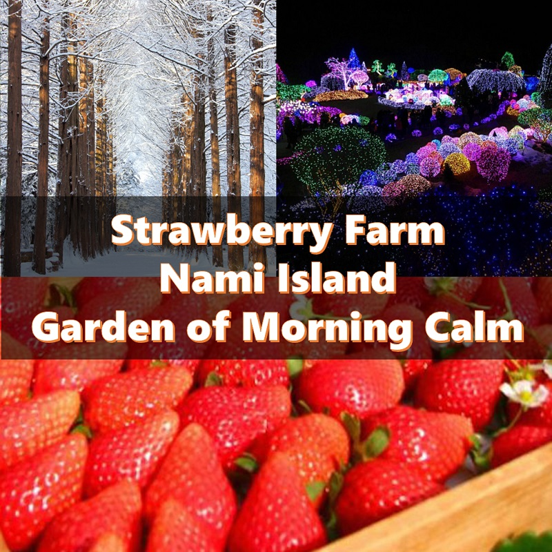 Nami Island, Strawberry Farm Picking and Garden of Morning Calm 1-Day Tour Shuttle Package | KoreaTravelEasy