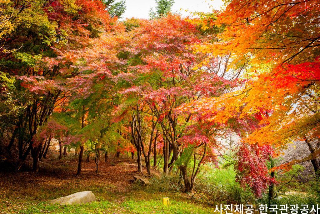 UP TO 26%, Korea Foliage 1-Day Tour To Gayasan Mountain+Cheongdo Railbike From Busan (Oct 25 - Nov 8) | KoreaTravelEasy