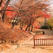 Autumn Gyeongukgung Palace