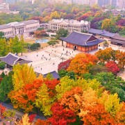Autumn Deoksugung Palace Fall Foliage