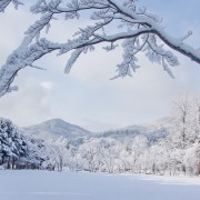 Nami Island Winter Snow