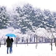 Nami Island Winter Travel