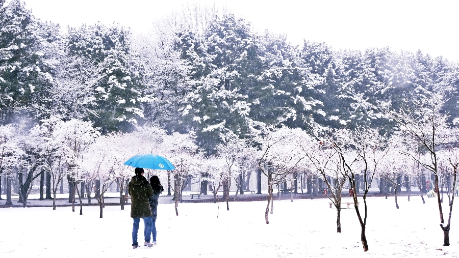 Nami Island Winter Travel