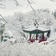 Nami Island_ Winter