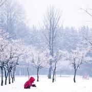 Nami_Island_Winter