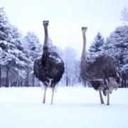Nami-Island-Winter_Tour