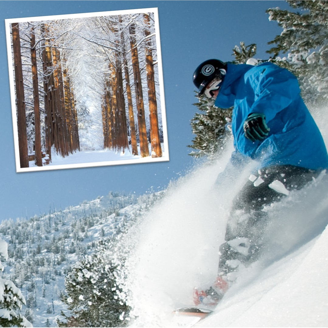 Nami Island and Vivaldi Park 1-Day Winter Ski and Snowboard Lesson Shuttle Bus Tour (Until Mar 4) | KoreaTravelEasy