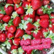 strawberry-picking-Korea-600x600_text