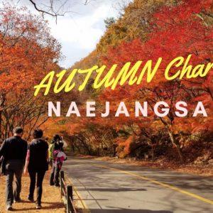 Naejangsan-Autumn-Charm-post