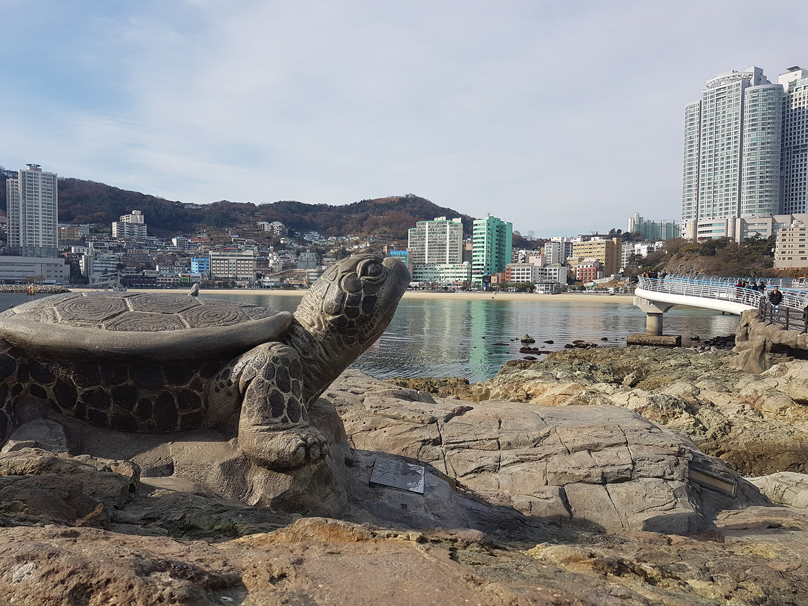 turtle_skywalk_busan