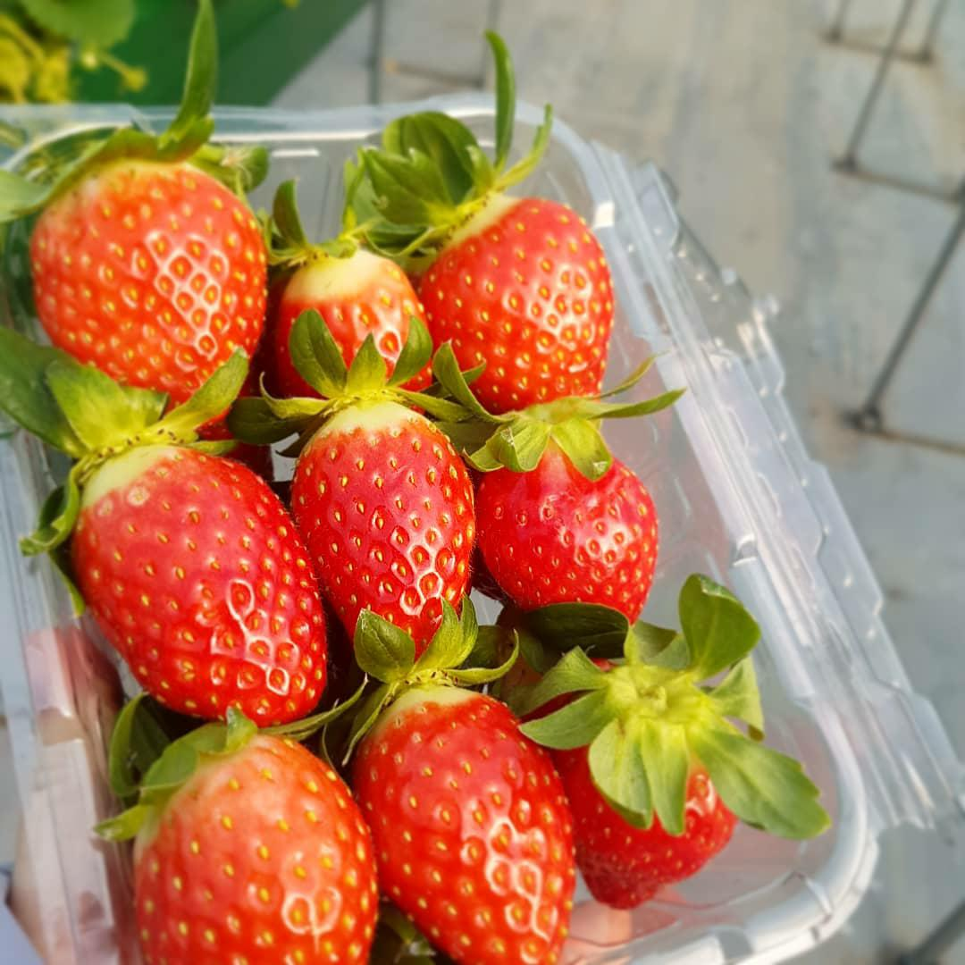 500g-of-strawberries