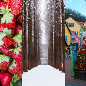 blog-strawberry-petite-france-nami-island
