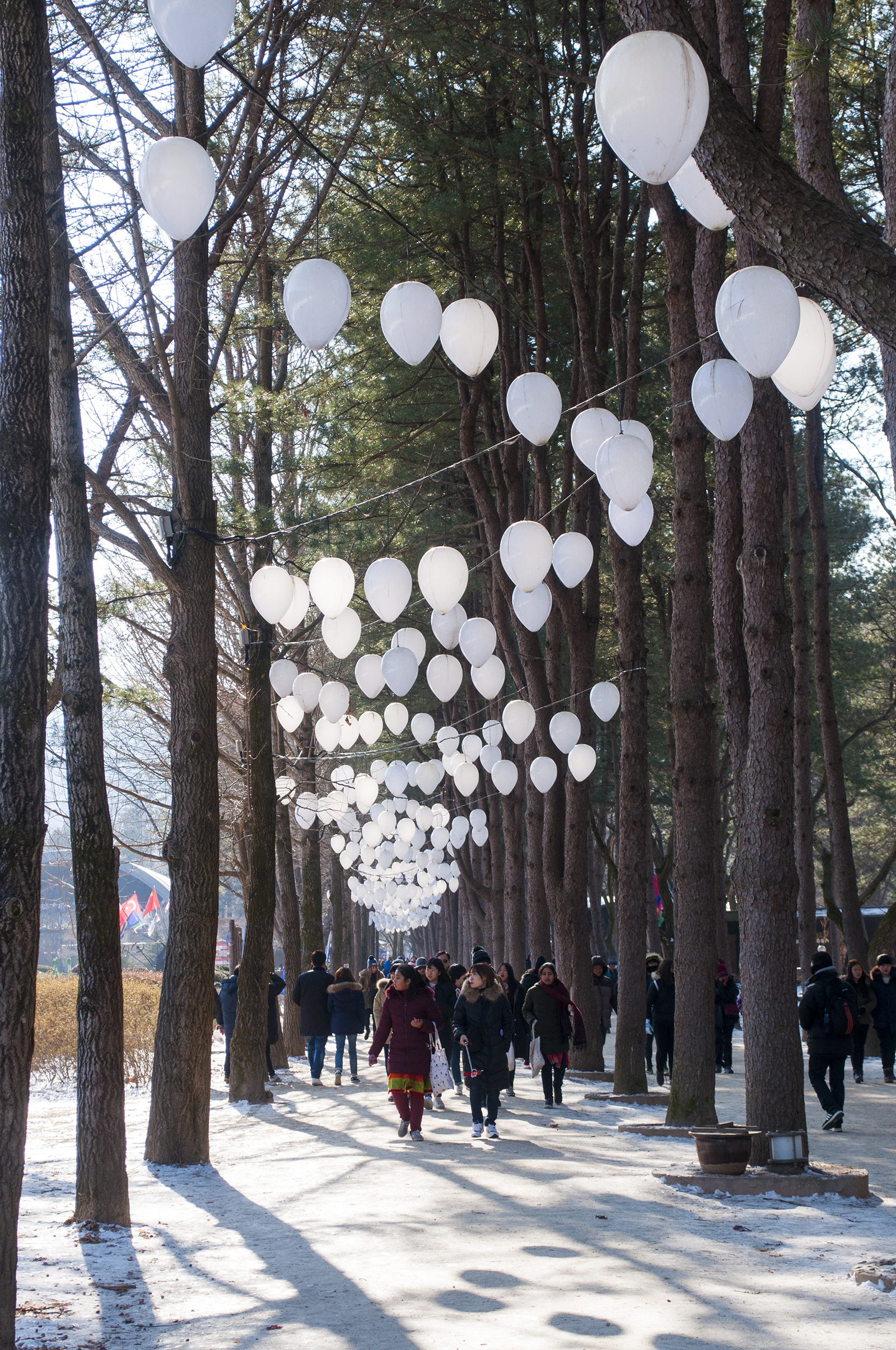 nami-island-trees-winter