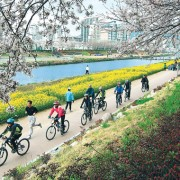 busan-cherry-blossom-oncheon-stream-park