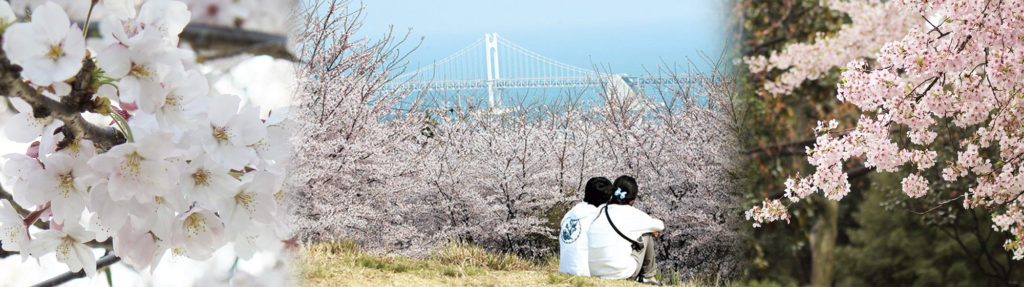 UP TO 11%, 2020 Busan Cherry Blossom 1Day Shuttle Bus Tour – From Busan (Mar 27 – April 12) | KoreaTravelEasy