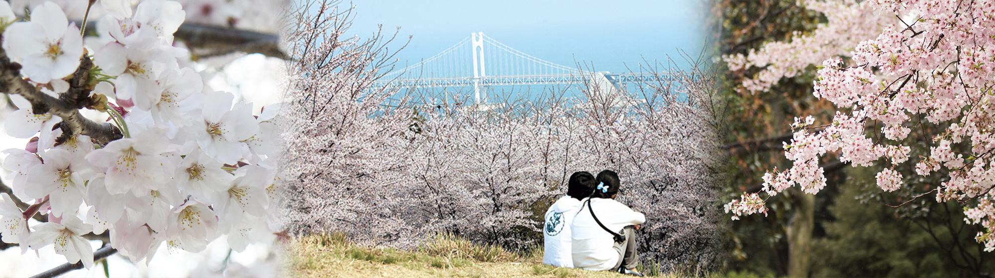 2020 Busan Cherry Blossom 1Day Shuttle Bus Tour – From Busan (Mar 27 – April 12) | KoreaTravelEasy