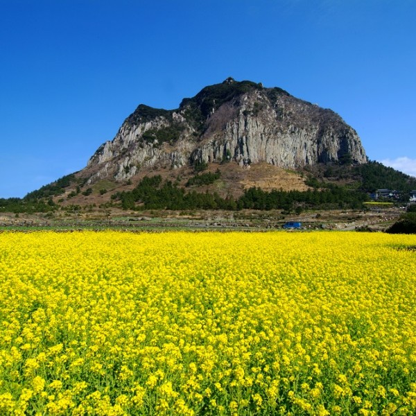 Jeju Island Beaches: 15% Off, Jeju Island One Day Bus Tour Package With Lunch