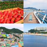 Busan Tour_Strawberry_Songdo_Gamcheon Village_Dadaepo