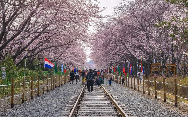 Yeouido cherry blossom festival 2020