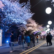 lets-run-park-seoul-night-cherry-blossoms
