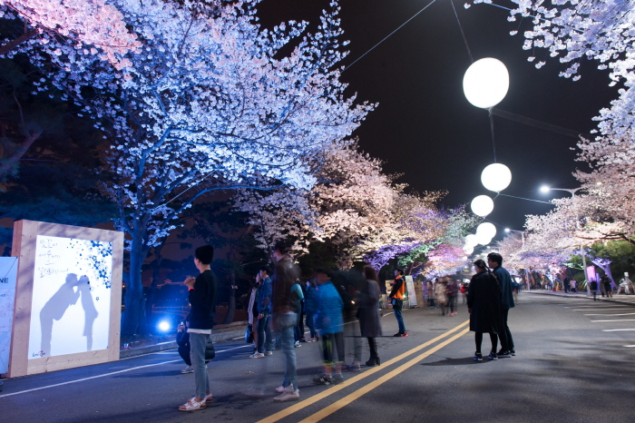 2018 Cherry Blossom Seoul Vicinity 1day Shuttle Bus Tour (Afternoon and Evening -with Seoul Grand Park Zoo, Rail Bike, Let's Run Park ) – Apr 7~11 | KoreaTravelEasy