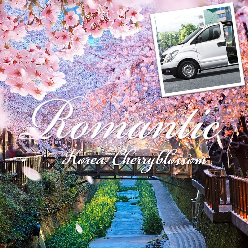 2018 Best Spring Cherry Blossom special 1-day private car and driver in Seoul (Until Apr 22) | KoreaTravelEasy