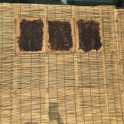 making-drying-kim-gim-seaweed-boryeong-experience