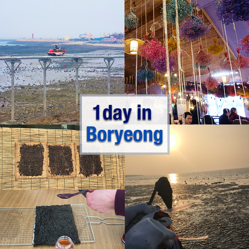 UP TO 20%, 1day Boryeong  Tour – Mud Flats Shellfish Picking, Gim Making Experience, Daecheon Beach, Zip Track, Sky Bike and Gaehwa Art Park | KoreaTravelEasy