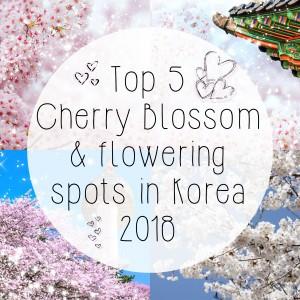 cherry-blossom-2018-blog-post-tbn