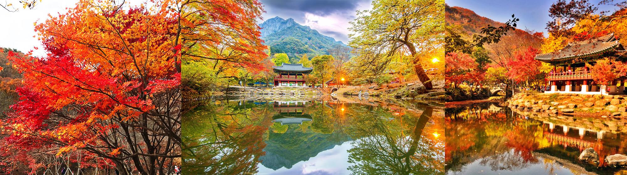 2020 Korea Fall Foliage) Mt. Naejangsan – Autumn 1Day Tour – From Seoul (Oct 25 – Nov 15) | KoreaTravelEasy