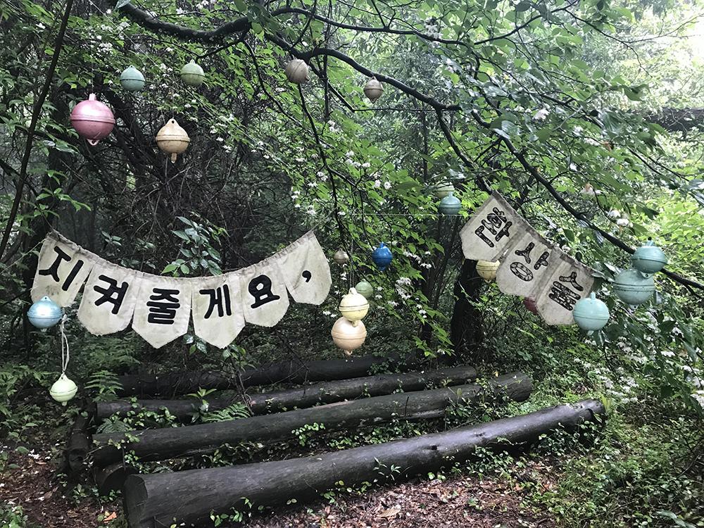 hwasang-forest-jeju-island