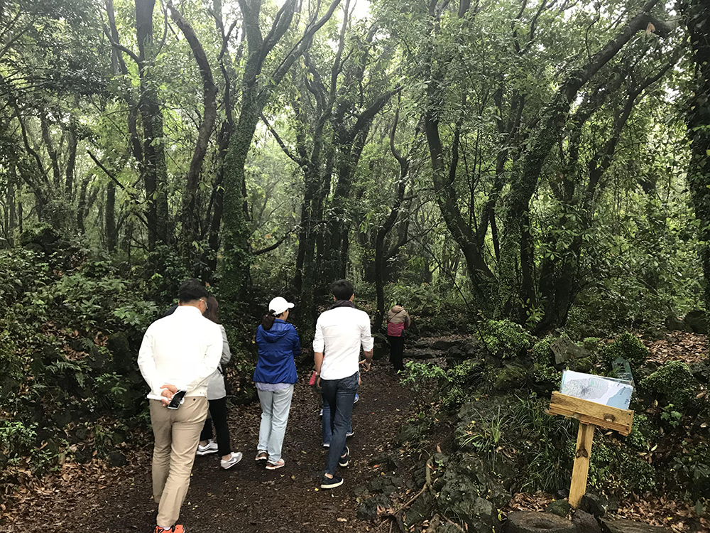 hwasang-forest-private-walk-jeju-island