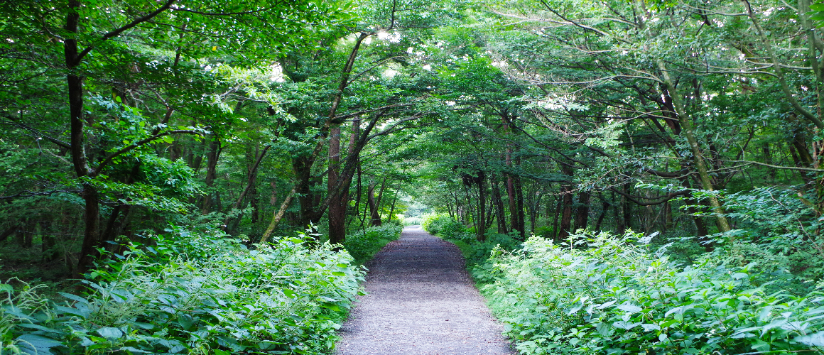 Saryeoni-Forest-Path-green-jeju