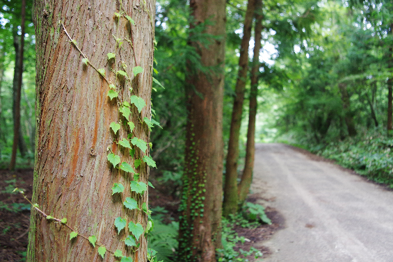 Saryeoni-Forest-Path-pretty-trees-jeju-island
