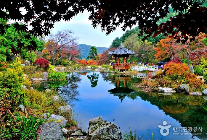 garden-of-morning-calm-lake-colorful