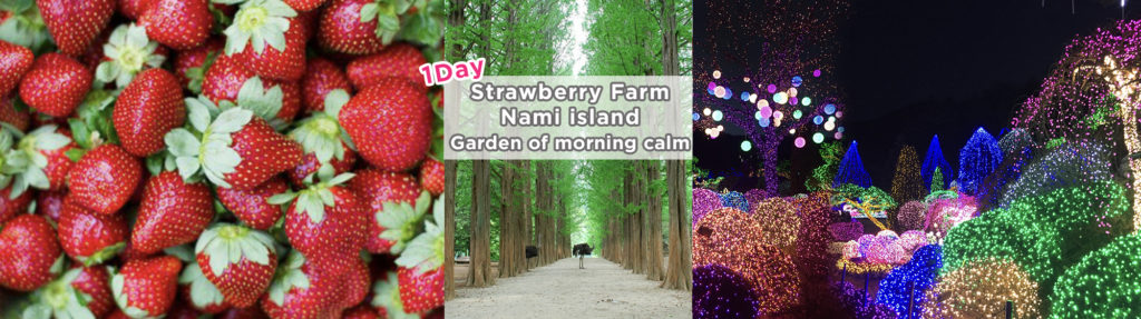 Nami Island, Strawberry Farm Picking and Garden of Morning Calm – 3 in 1Day Tour Shuttle Package (2019 Dec 1 – 2020 May 31) | KoreaTravelEasy