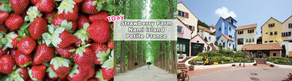 Nami Island, Petite France and Strawberry Farm Picking 1-Day Tour Shuttle Package | KoreaTravelEasy
