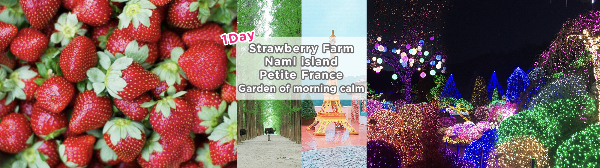 Nami Island, Petite France, Strawberry Farm Picking and Garden of Morning Calm 1-Day Tour Shuttle Package | KoreaTravelEasy