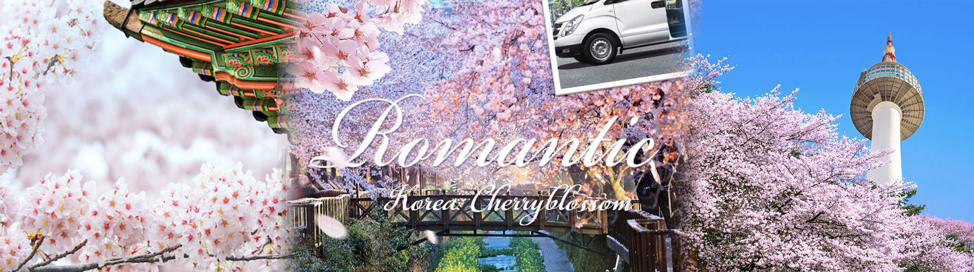 2019 Best Spring Cherry Blossom special 1day private car and driver in Seoul (Apr 1~16) | KoreaTravelEasy