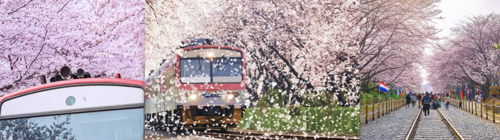 UP TO 22%, 2019 Jinhae Cherry Blossom Festival 1Day Shuttle Bus Package tour (From Busan Mar 27 – Apr 7) | KoreaTravelEasy