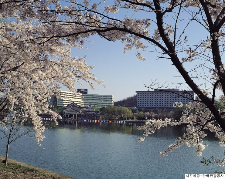 2019 gyeongju cherry blossom festival 1 day shuttle bus package tour from busan  mar  30th  u2013 apr