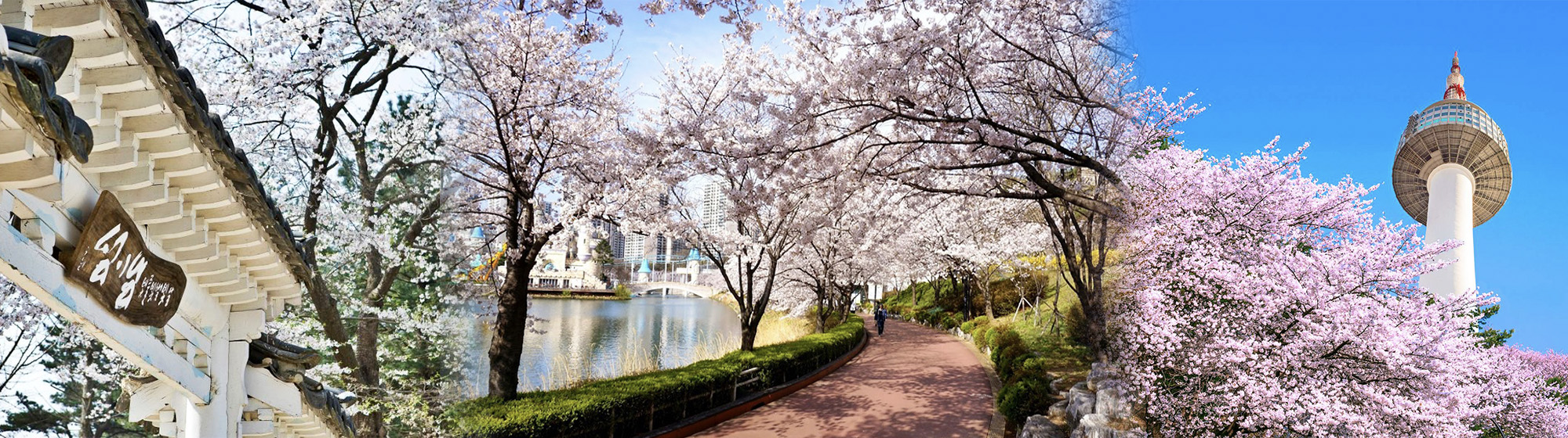 Seoul and Nami Cherry Blossom Festival 1day Shuttle Bus including Tour Guide and PICK UP (Apr. 1~26) | KoreaTravelEasy