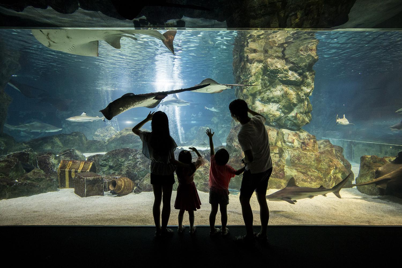 Coex aquarium family
