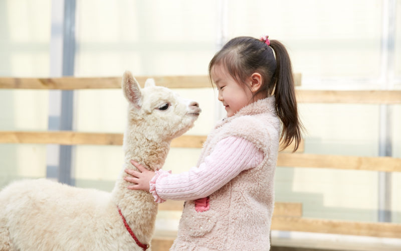 alpaca house kid playing