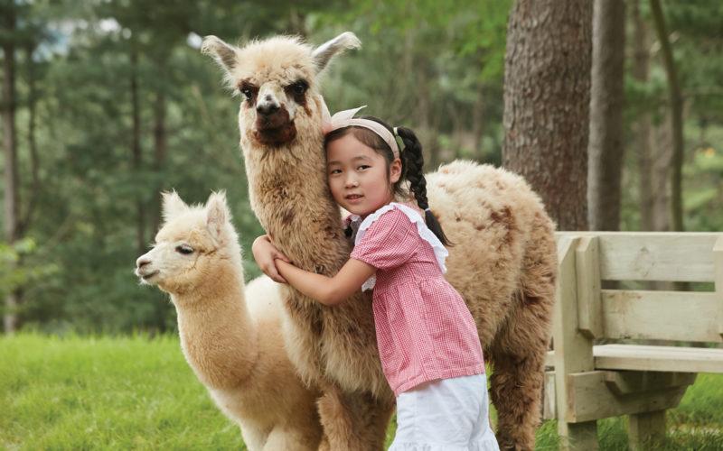 kid holding alpaca