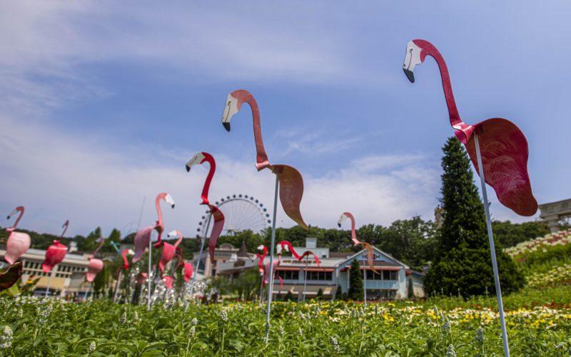 summer festival everland