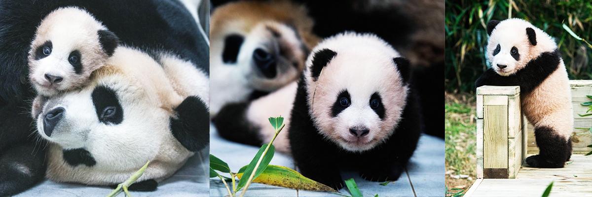 Panda World Everland