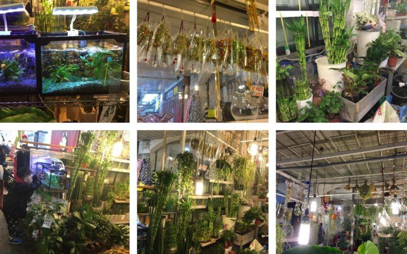 mangwon market plants