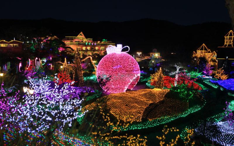 herb garden pink globe