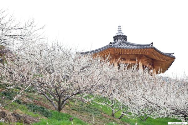 maehwa village temple
